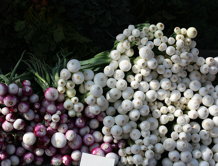 oignon planter les oignons jardinage bio. Black Bedroom Furniture Sets. Home Design Ideas