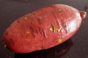patate douce culture