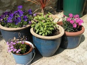 plante en pot extérieur