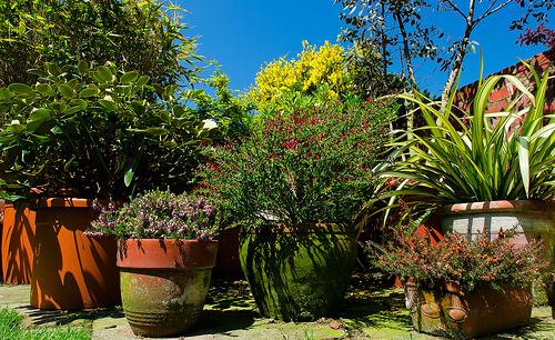 Plantes en pots plantes en pot un mur vgtal nuest pas for Grande plante exterieur en pot