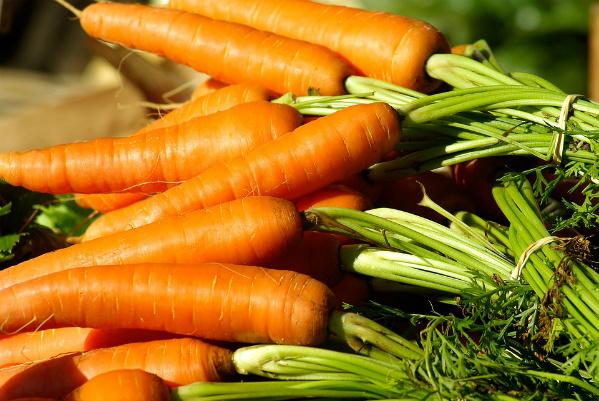 quand semer les carottes