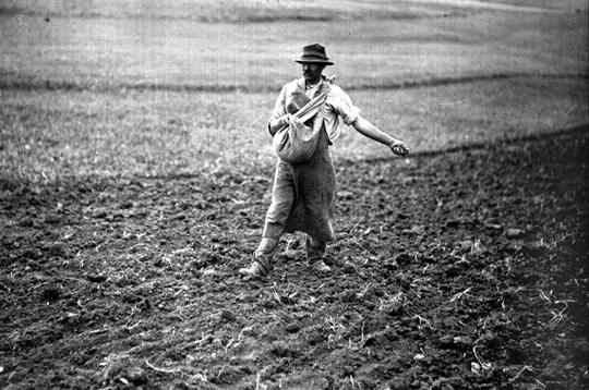 Semailles quand semer principes de base jardinage bio - Semer a la volee ...