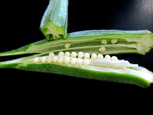 Gombo culture du gombo jardinage bio - Comment planter des asperges ...