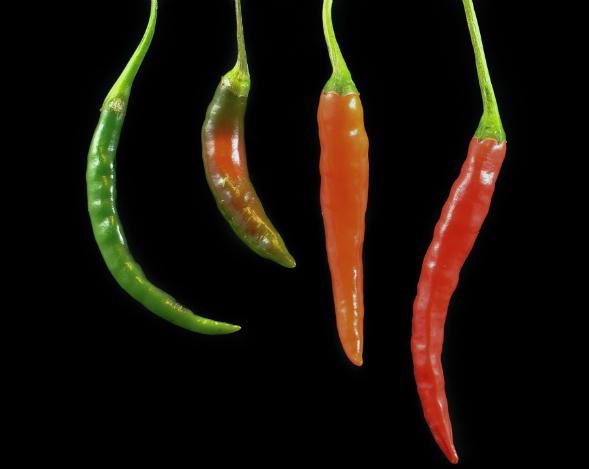 semis piment